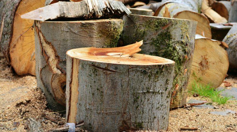 Symbolbild Pixabay Bäume fällen
