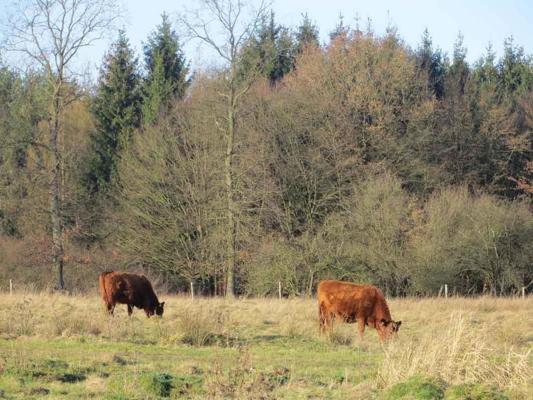 Lohe Rinder - Wentorf im Blick